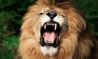 Empleado de un zoológico mexicano muere al ser atacado por un león