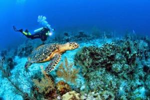 Ecuador celebra los veinte años de creación de la Reserva Marina de Galápagos