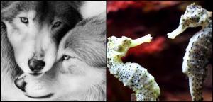 Consejos para durar en el amor, un reflejo de los animales más románticos del mundo