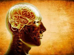 """Células con """"memoria  inmunológica"""""""