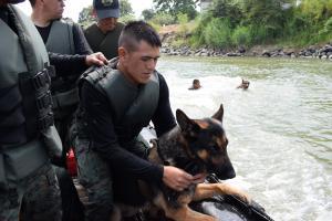 Rectificación: perros  no irán a la frontera