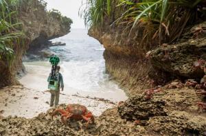 Google muestra la vida salvaje de la remota isla australiana de Christmas