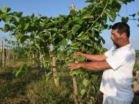 Agricultores buscan la causa de daños en sus cultivos