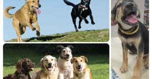 ¿En realidad conocemos cuál es la edad de nuestro perro?