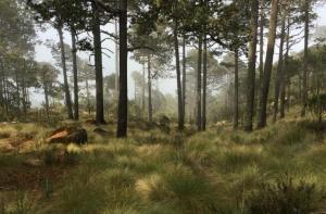Reforestar no es la medida suficiente para conservar los bosques