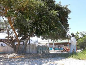 Islas Galápagos avanza en el combate a insecto que chupa la sabia de los manglares