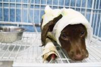 Inicia juicio a acusado por despellejar vivo a un cachorro en Argentina