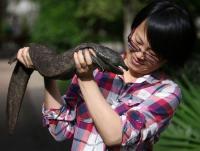 Salamandras gigantes, en peligro de extinción por ser alimento de lujo