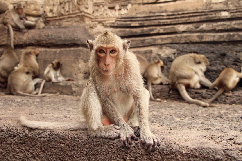 La ciudad tailandesa donde los monos viven como reyes
