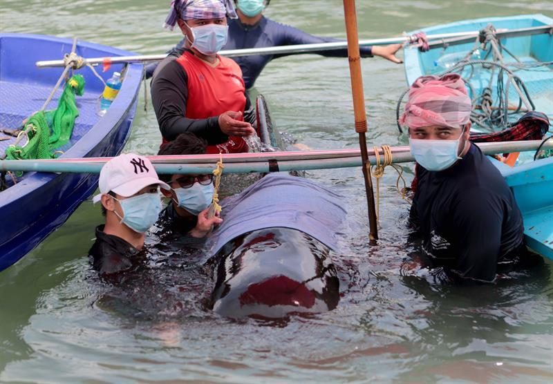 Muere una ballena en Tailandia por tragarse ochenta bolsas de plástico