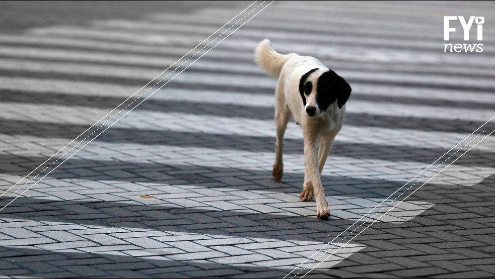 'La favela de los perros', un lugar que alberga más de mil perros