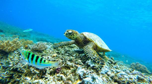 Perú entrega a Ecuador 26 tortugas galápagos incautadas en un autobús