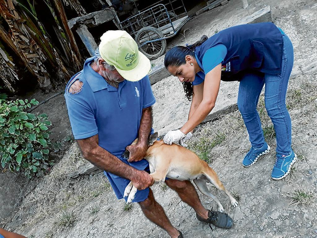 Más de 10 mil animales fueron vacunados contra la rabia, aún faltan más