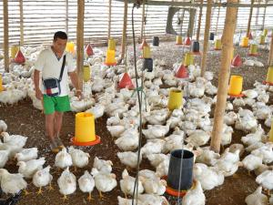 Exportar pollo no los emociona