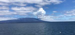 Cesan flujos de lava que llegaron a la orilla desde un volcán en Galápagos