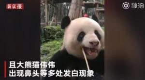 Zoológico chino despide a trabajador por vídeo viral en el que maltrata oso panda