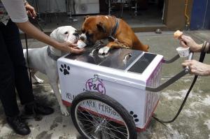 Helados para perros, un paso más hacia la humanización de las mascotas