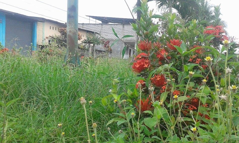 Maleza crece en jardineras