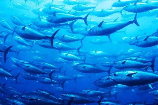 Capturas de pescado en el mar podrían disminuir hasta un 12% para 2050, según estudio