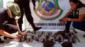 Rescatan en Perú a casi 200 crías de tortuga del maletero de un autobús