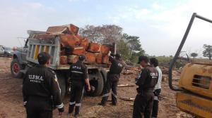 Contra la tala de árboles
