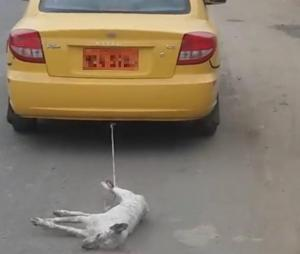 Dueño de taxi que arrastró a un perro en Montecristi pide disculpas