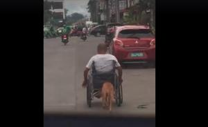 Vídeo: Un perrito ayuda a empujar la silla de ruedas de su dueño