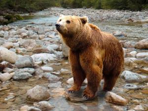 Viral: mujer reprende a un oso   con su voz  de mamá