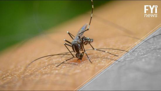 VÍDEO: Crean prendas especiales para repeler picadura de mosquitos