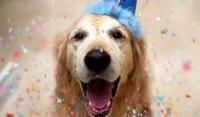 Día del Perro, sí, ¡existe!