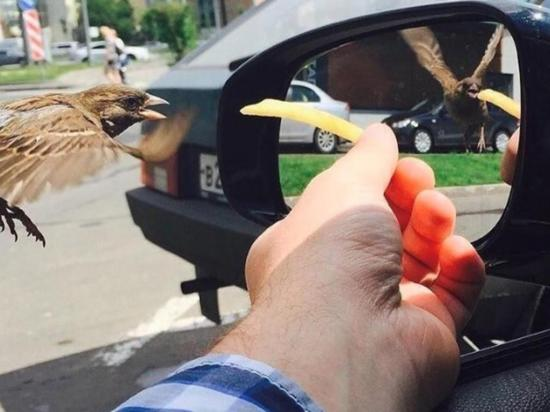Foto de gorrión en otra ''línea de tiempo'' se vuelve viral