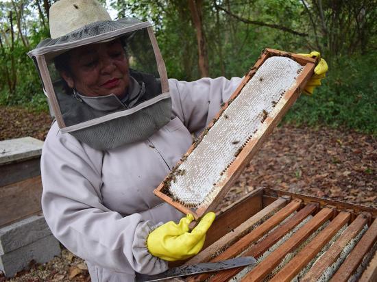 Las abejas mueren por los químicos