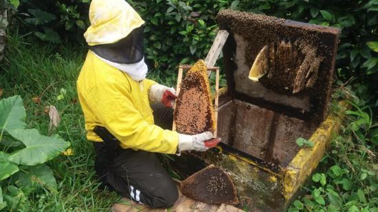 Retiran 20 mil abejas
