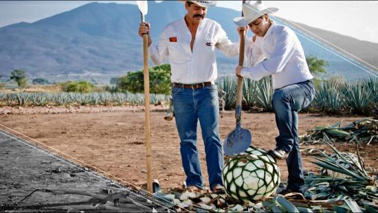 VÍDEO: Más de 400 litros de tequila se exportan por minuto en el mundo