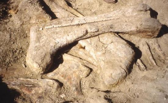 Hallan el pie de dinosaurio más grande en Estados Unidos, según investigadores