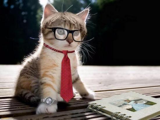 ¿Eres emprendedor? un parásito de los gatos puede ser el motivo