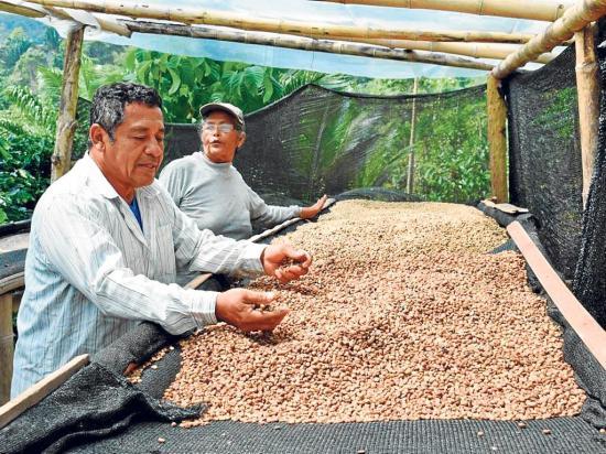 Caficultores de Manabí exigen un mejor precio