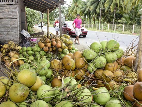 Las palmeras están sin cocos