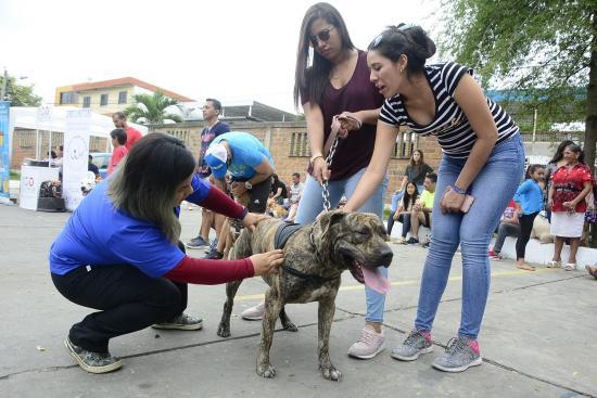 Mascotas se lucieron en festival canino