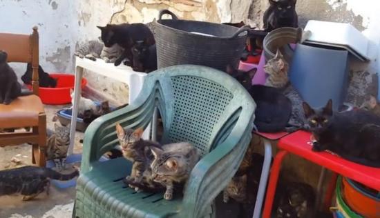 Rescatan en España a 101 gatos que vivían con dos personas rodeados de basura