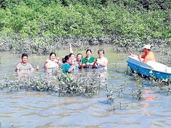 500 plantas de  manglar rojo fueron sembradas