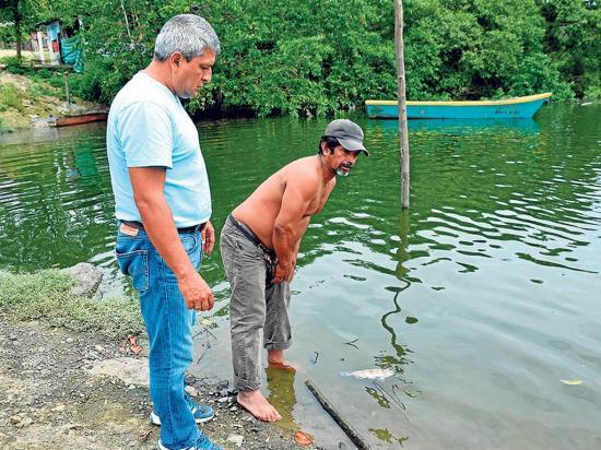 Muerte de peces en puerto Tizal fue por bacteria