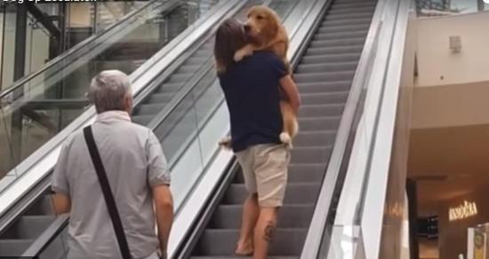 Un hombre carga a su perro asustado como a un 'bebé' para subir escaleras eléctricas