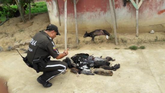 Abejas acaban con la vida de perros y gallinas en Babahoyo