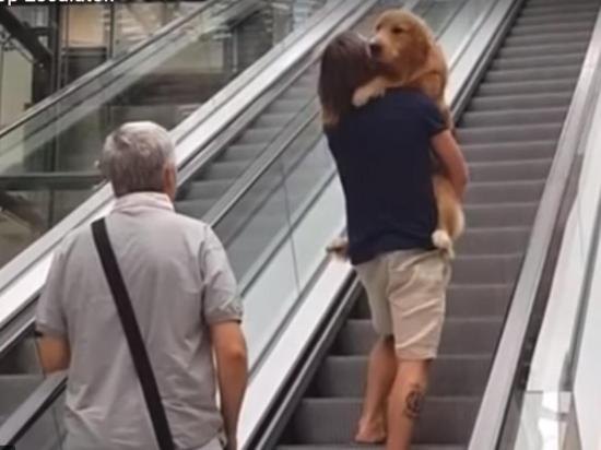 Carga a su mascota como a un bebé