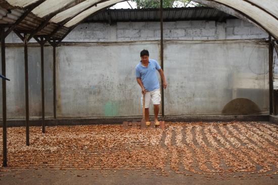 Potencia agrícola