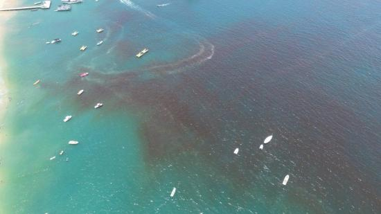Miles de peces muertos por marea roja aparecen en varias playas de Estados Unidos