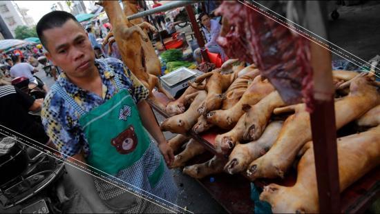 La mejor solución para refrescarte es… ¿Carne de perro?