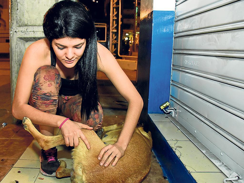 Una heroína que cuida de los perros callejeros