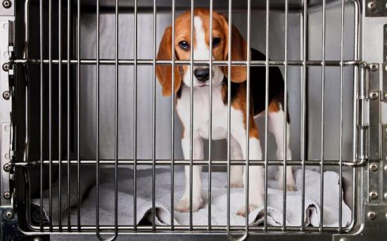 Estados Unidos: Un laboratorio de Nebraska quiere saber cómo piensan los perros
